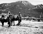 Fusco, il mulo delle due guerre